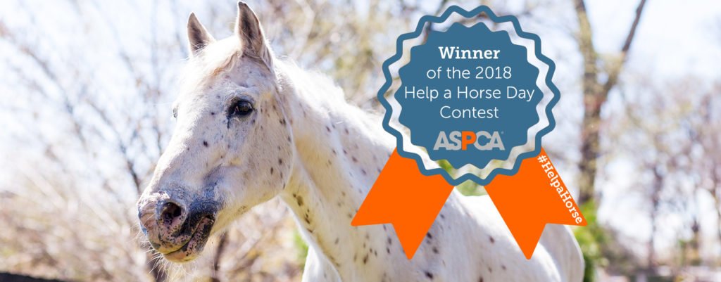 Tennessee Shelter – Horse Plus Humane Society